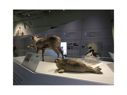 Arctic Gallery Canadian Museum of Nature 2018